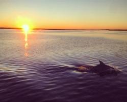 Dolphin escort into my anchorage