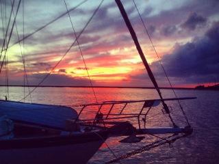 Ave against a Jekyll Island, GA, sunset
